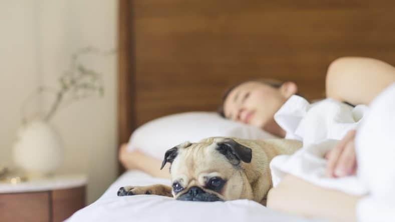 Hund og dame sover i brun seng