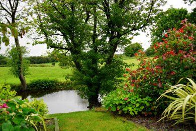 Lille sø i meget grøn have